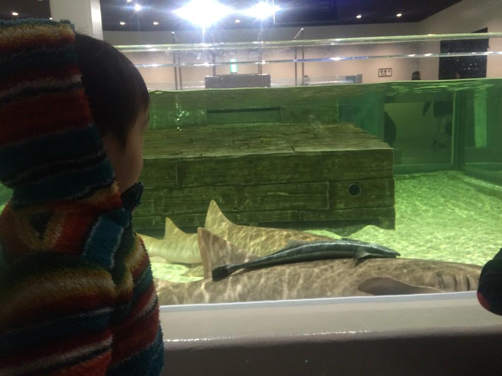 ニフレルでかい魚
