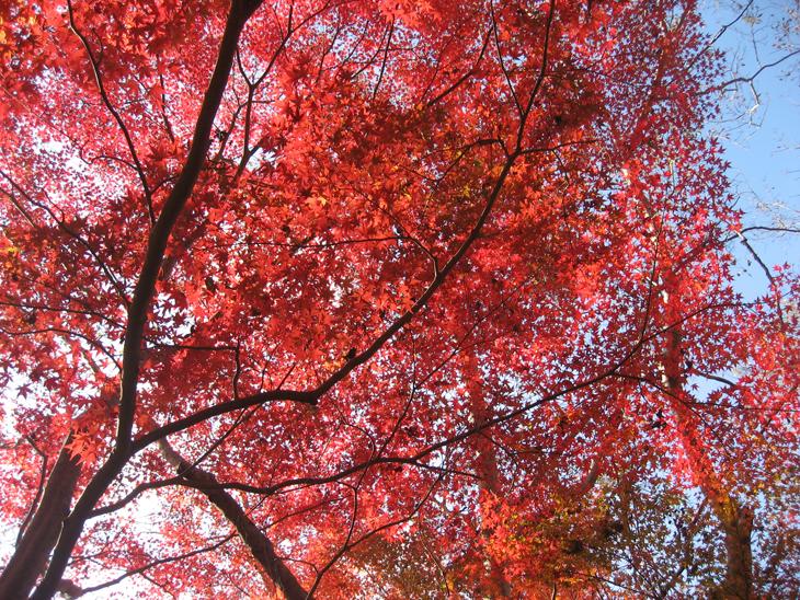 廃線歩き 紅葉